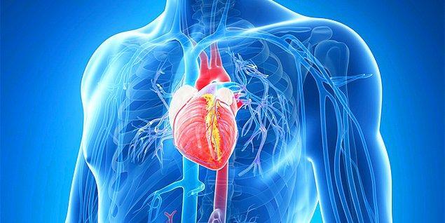 10. Kalp Sağlığını korur.
