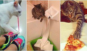 Sevimli Dostlarımız Kedilerin Aslında Ne Kadar Yardımsever Olduklarının Kanıtı Niteliğinde 10 Görsel