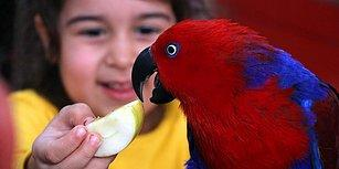 Aydın'da Bir İlkokul Müdürü Çocuklara Hayvan Sevgisi Aşılamak İçin Kurdu: 'Sevimli Kanatlar' Kuş Parkı