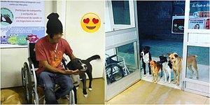 Hastaneye Kaldırılan Evsiz Adamı Ziyarete Giden Tüylü Dostlarını Görünce Gözyaşlarınıza Hakim Olamayacaksınız!