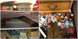 Ev Arkadaşları Arıyorsanız Bu Görüntüleri Gördükten Sonra Bir Daha Düşüneceksiniz!