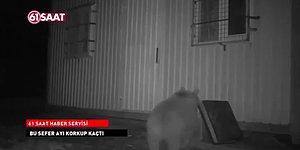 Evine Dadanan Ayıyla Karşılaşan Trabzonlu Adamdan Muhteşem Tepki: 'Hooww Adamım Haber?'