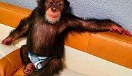 Twitter'ın Yeni Gözdesi Daily Maymun'un Birbirinden Eğlenceli 16 Paylaşımı