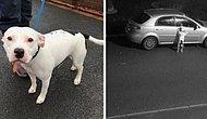 İnsan Dostu Tarafından Yolun Kenarına Bırakılarak Terk Edilen Köpeğin İçinizi Acıtacak Görüntüleri