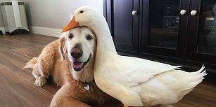 Bilim İnsanları Kanıtladı: Köpeğiniz Size İyi veya Kötü Davranan İnsanları Ayırt Edebiliyor!