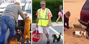 Size Kurban Olsunlar! İnsan ve Diğer Dostlarına Ellerinden Geldiğince Yardım Etmeye Çalışan Köpekler