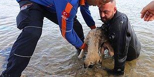 Dalgıç Polis, Donan Gölde Ölmek Üzere Olan Köpeği Son Anda Kurtardı!