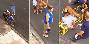 Yaralı Dostuna, Bir Annenin Çocuğuna Gösterdiği Saf ve Karşılıksız Sevgi Gibi Sevgi Gösteren Köpek