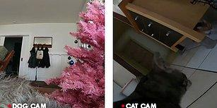 Kedi ve Köpekler, İnsan Dostları Evde Yokken Ne Yapıyorlar?