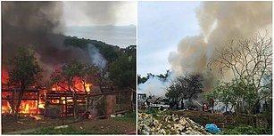 Büyükada'dan Dumanlar Yükseldi: Ahırda Başlayan ve Ormanlık Alana Sıçrayan Yangında 9 At Can Verdi