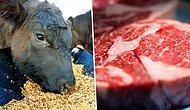2019'da Dünyamız İçin Yapabileceğiniz En İyi Şey: Daha Az Et Tüketmek