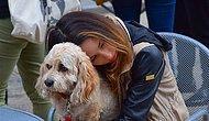 Bilim İnsanlarına Göre Sevdiğiniz Bir İnsanı Kaybetmekle Köpeğinizi Kaybetmenin Acısı Aynı!