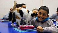 'Pamuk' Okullu Oldu: Öğrencilerin Okul Bahçesinde Bulup Sahiplendiği Kedi, Şimdi Derslere Giriyor!