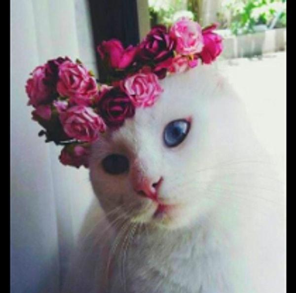 Çiçekçi Kedi