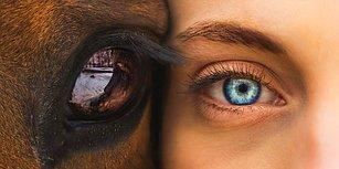 Birbirinden Etkileyici Gözlere Sahip Bu İnsanların Bakışlarında Kaybolmak İsteyeceksiniz!