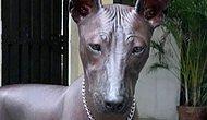 Görenlerin Heykel mi Yoksa Gerçek mi Ayırt Edemediği Köpek!
