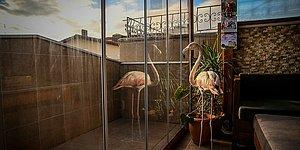 Yaralı Halde Bulup Evine Getirdi: Bursalı Hayvansever, Evde Flamingo ve Baykuş ile Birlikte Yaşıyor