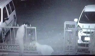 Gece Yarısı Titreyerek Yanına Gelen Köpeğe Montunu Veren Güvenlik Görevlisi