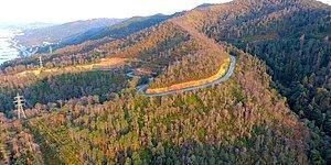 Yeşili Betona Çevirme Gayretindeyiz: Kavşaklara ve Yol Kenarlarına Dikilen Fidanlar Artıyor Ancak Ormanlar Azalıyor
