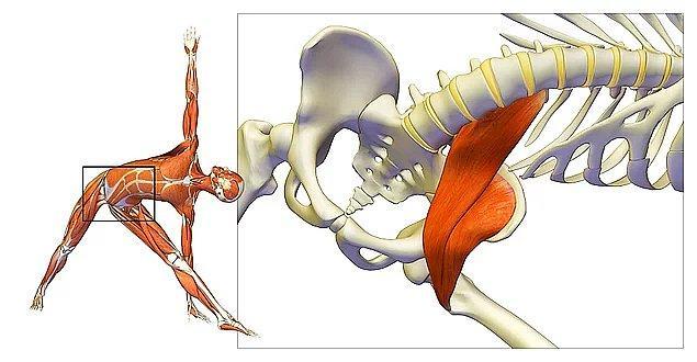 Kalça kemiğine yakın bir bölgede bulunan psoas kası; hareket, denge, eklem fonksiyonları, esneklik ve diğer tüm bedensel özellikleri doğrudan veya dolaylı şekilde etkiliyor.