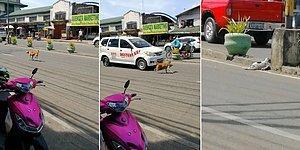 Yaralı Yavrusu İçin Yoldan Geçen Arabalardan Yardım İsteyen Anne Köpek