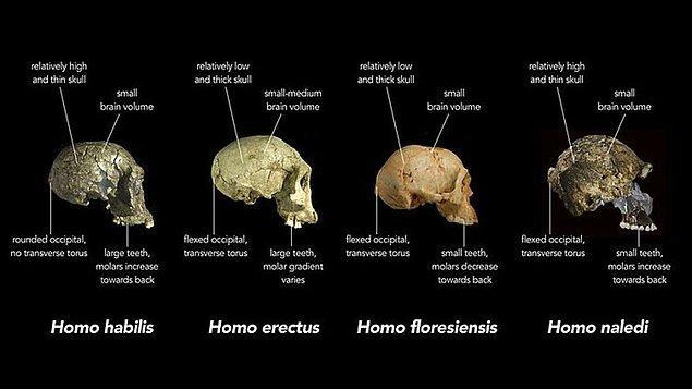 Homo Floresiensis, 18.000 yıl öncesine kadar varlığını korumayı başarmıştı.