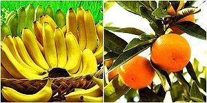 Hayat Bayram Olacak: Bu Sağlıklı 20 Yiyecek Sayesinde Artık Daha Mutlu Bir Yaşam Süreceksiniz