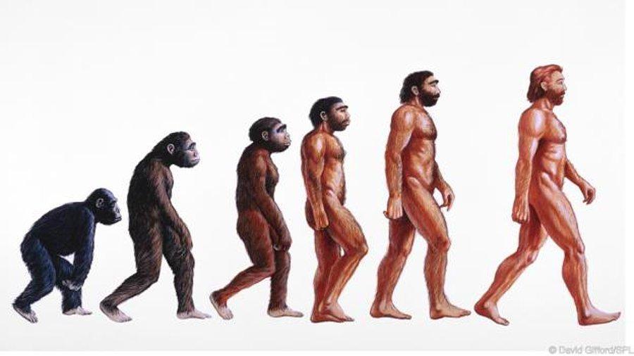 Neden Hayatta Kalan Tek İnsan Türü Olduğumuzu Daha Önce Hiç Merak Ettiniz  mi? - onedio.com