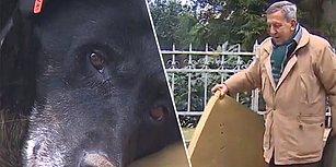 17 Ağustos Depremi'nde Her Şeyini Kaybettikten Sonra Simit Satmaya Başlayan Adamın Sokak Köpeğiyle Olan Muhteşem İlişkisi!