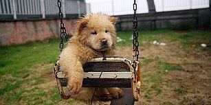 Hapis Cezası Düğümü: Hayvana İşkence Yasası Yine Seçim Sonrasına Kalabilir