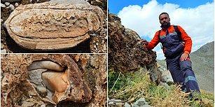 Tesadüfen Bulundu: Konya'da Deniz Canlılarına Ait 98 Milyon Yıllık Fosiller Keşfedildi