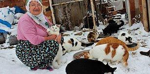 Soğuk Havada Dışarıda Üşümesinler Diye Evinde 58 Kediye Bakan Nuriye Teyze