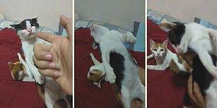 Yaptığı Ölü Taklidiyle Oscar'lık Performans Sergileyen Kedi