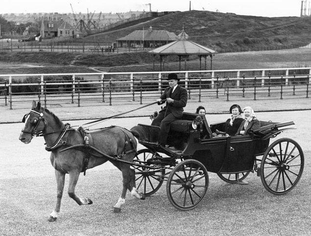 5. At arabası