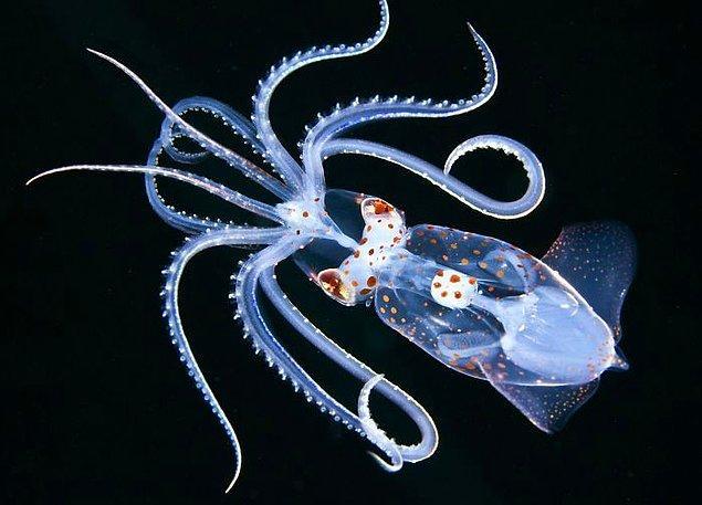 """5. Birincilik, Makro okyanus, """"Ancistrocheirus,"""" Jeff Milisen."""