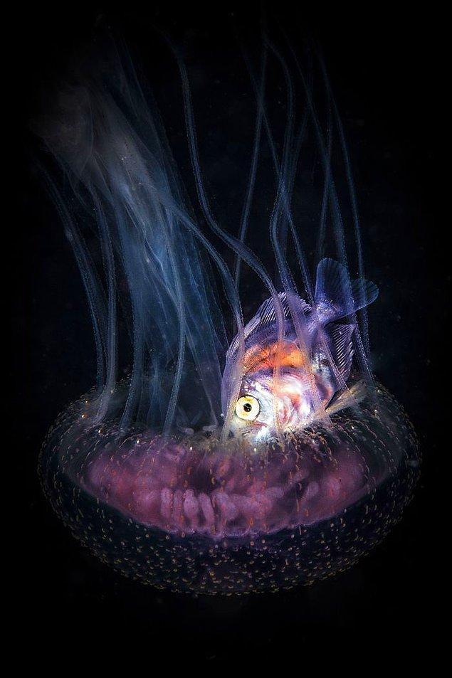 """24. Mansiyon Ödülü, Deniz Yaşamı Davranışları, """"Jelin İçinde Yaşamak,"""" Doris Vierkötter."""