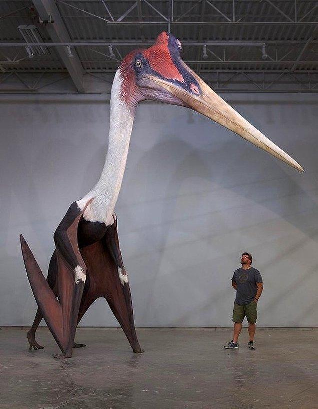 6. Şimdiye kadar var olmuş bilinen en büyük uçan hayvan.