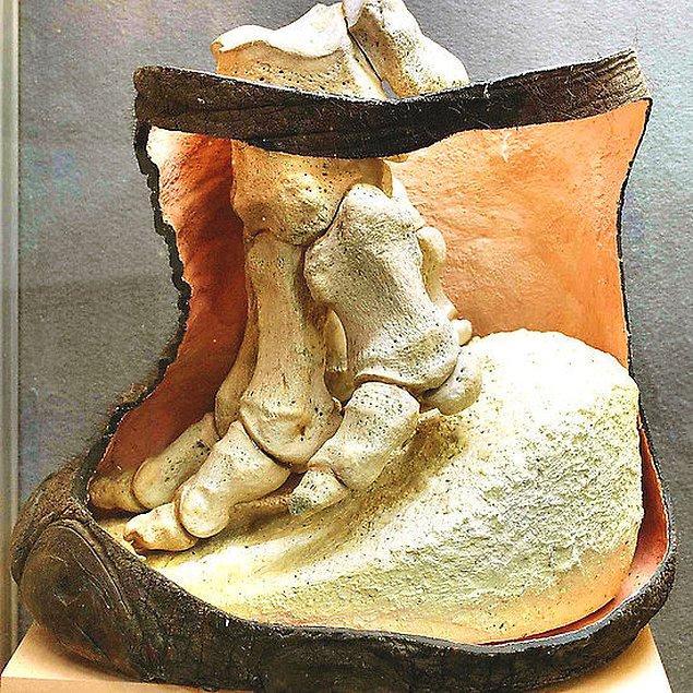 16. Bir filin ayağı.