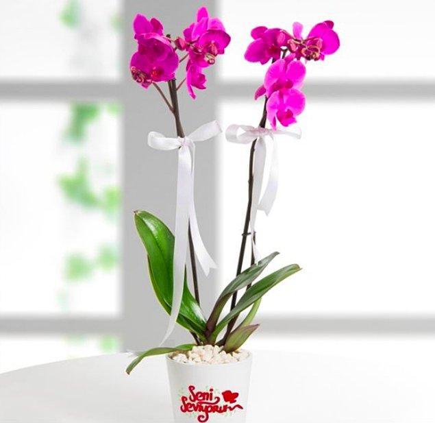 """7. Orkidenin güzelliğine renk katan ve saksısıyla """"Seni Seviyorum"""" diyen Mor Orkideler"""
