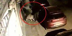 Köpeği Taciz Eden Kağıt Toplayıcıya Mahalle Dayağı Atan İnsanlar