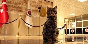 Isınmak İçin Sığınmıştı: 'Kedi Adalet' Amasya Adliyesi'nin Maskotu Oldu ve Yeni Yuvasında Mutlu