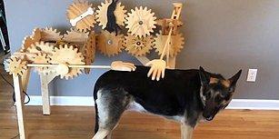 Köpek Dostlarımız İçin Düşünülmüş, Muhteşem Otomatik Köpek Sevme Aleti