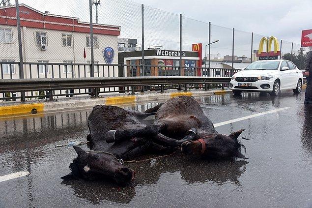 Kazada bir at hafif yaralanırken, diğeri çeşitli yerlerinden darbe aldı. Vatandaşlar durumu polis ve Antalya Büyükşehir Belediyesi'ne bildirdi.
