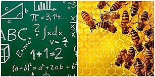 Bizden Daha 'Zeki' Çıktılar: Arılar Artık Temel Matematik Problemlerini Çözebiliyor!