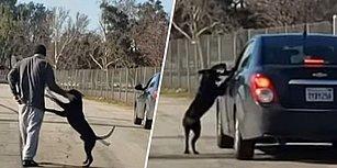 İnsan Dostu Tarafından Terk Edilen Köpeğin Aracın Peşinden Koştuğu Yürek Burkan Anlar