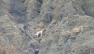 Haluk Levent Yardım Elini Uzattı: Çankırı'da Kanyona Düşen Köpek 5 Gündür Kurtarılmaya Bekliyor