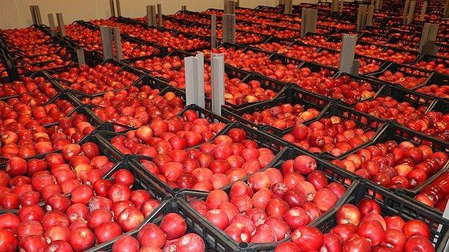 Türkiye üretimi elmaların, bitki sağlığı standartlarına ilişkin belgelerinin geçersiz olduğu tespit edildi.