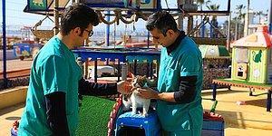 Mersin'deki 'Miyav Park'ın Muhtarı Mırmır Oldu: 'Biz Yastık, Minder Sevdalısı Değil Hizmet Sevdalısıyız'