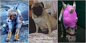 Türkiye Hayvanlar İçin Cehennem mi? Dört Ayaklı Dostlarımıza Gün Yüzü Göstermediğimizi Kanıtlayan Olaylar