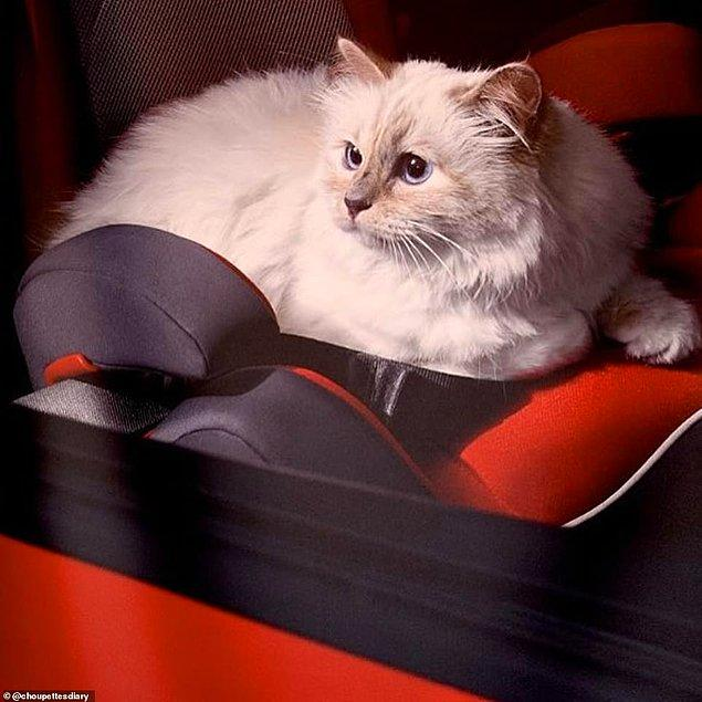 """Fransız gazetesi Le Figaro'ya göre, Alman yasalarına göre böyle finansal bir anlaşma yapılabiliyor. Tek şart ise kedinin, daha öncesinde """"varis"""" olarak atanmış olması gerekiyor."""